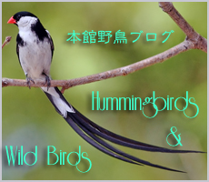 Hummingbirds--Wild-Birds.jpg