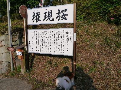 2014奈良5