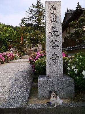 2014奈良6