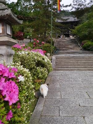 2014奈良8