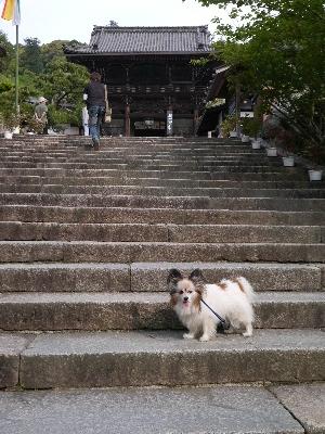 2014奈良11