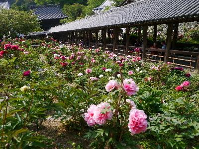 2014奈良25