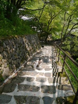 2014奈良39