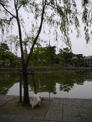2014奈良3−2