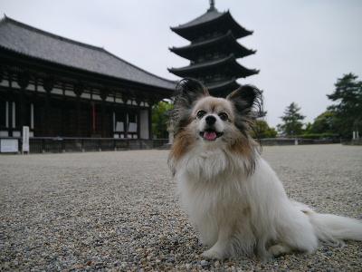 2014奈良3−6