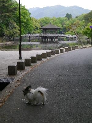 2014奈良3−9