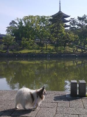 2014奈良4−2
