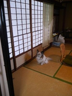 2014奈良4−11