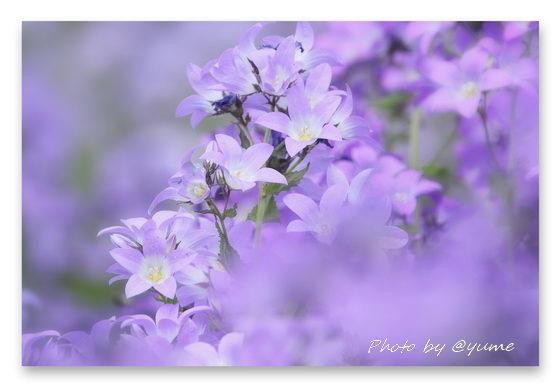 b-IMG_6796.jpg