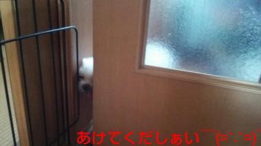 20140910_222203_convert_20140911101113.jpg