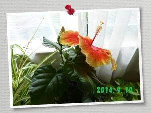 P1110735_convert_20140910095103.jpg