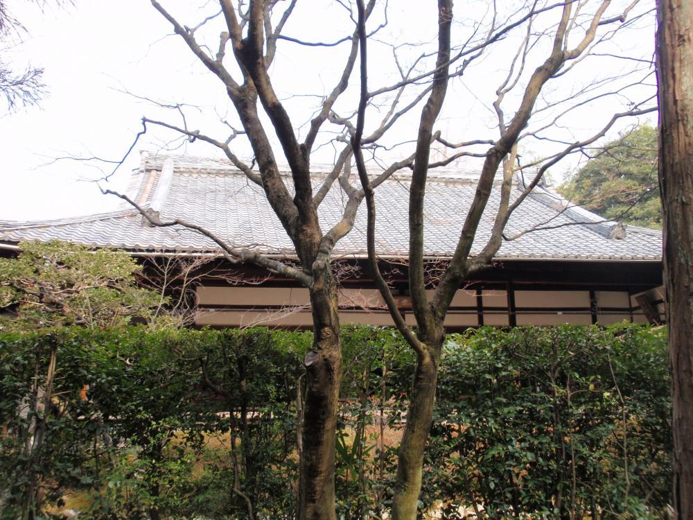 桂春院10