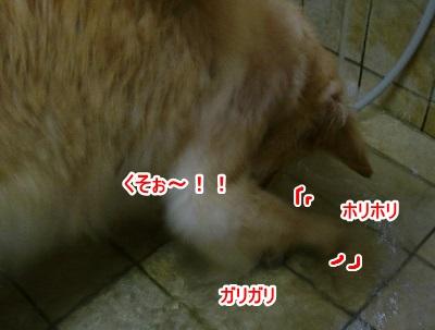 CIMG4078 (400x303)ー1