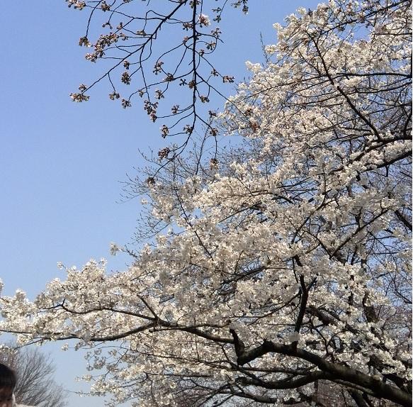 ueno_201405062332433bd.jpg