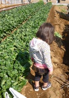 ブログ2 0329収穫