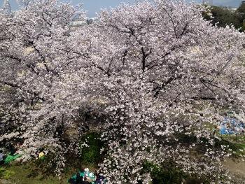咲き乱れる (350x263)