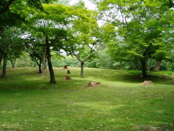 奈良公園_01 (350x263)