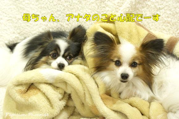 20140321_0412_01.jpg