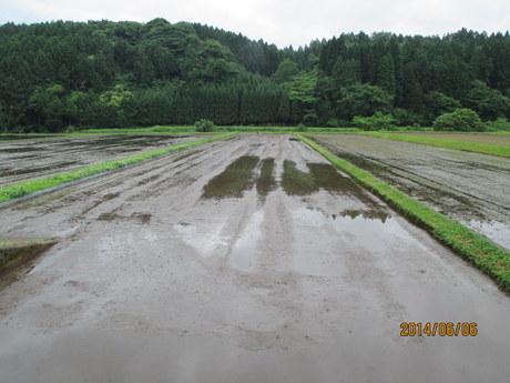 田植え前の田圃