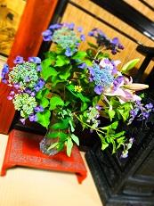 紫陽花 居間