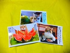 ポストカード 猫2