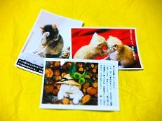 ポストカード 猫3