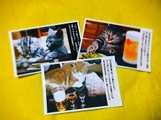 ポストカード 猫1