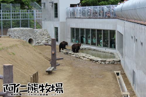 阿仁熊牧場 ヒグマ