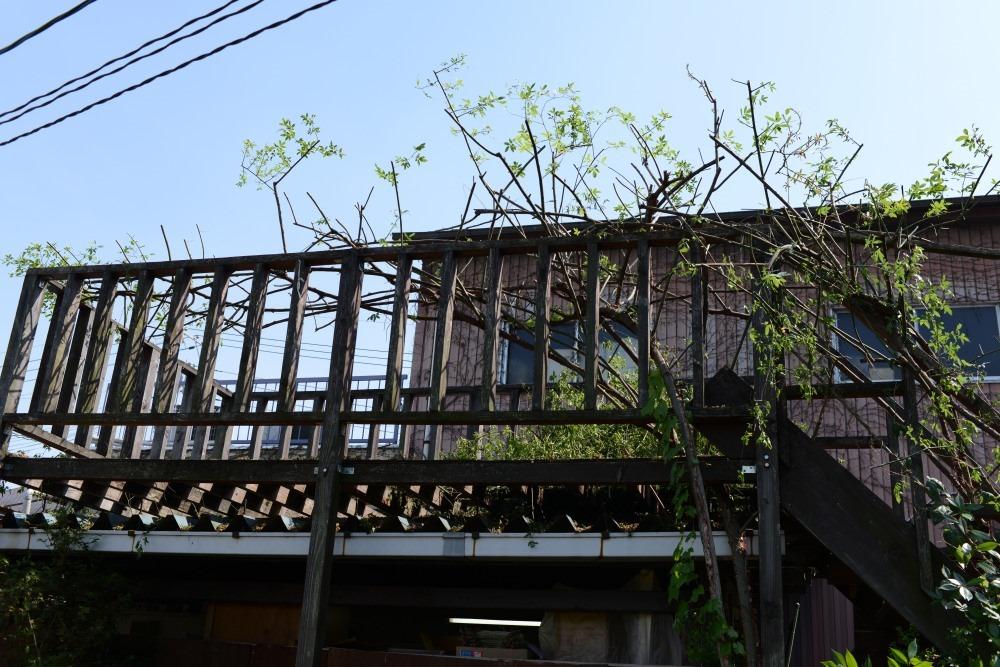 http://blog-imgs-70.fc2.com/m/a/t/matuoengei/DCS_3391.jpg
