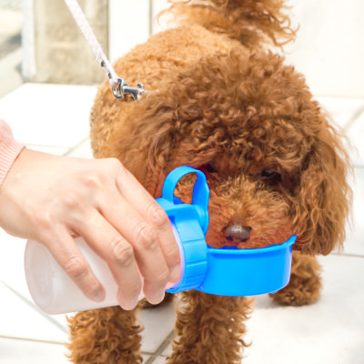 ペット用水筒OFT