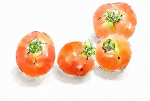 野菜3(トマト)