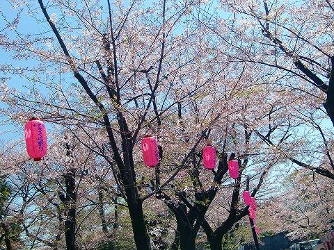 千葉城の桜 14.4.8
