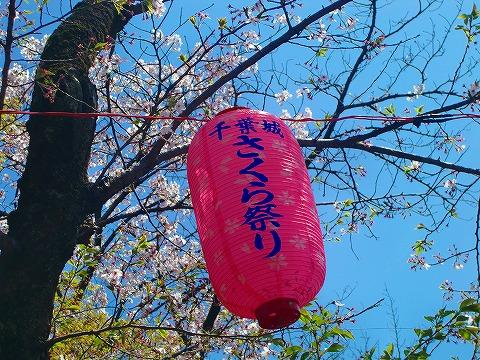 桜まつり~ 14.4.8