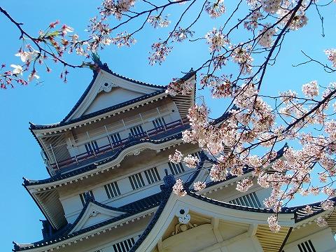 千葉城と桜 14.4.8