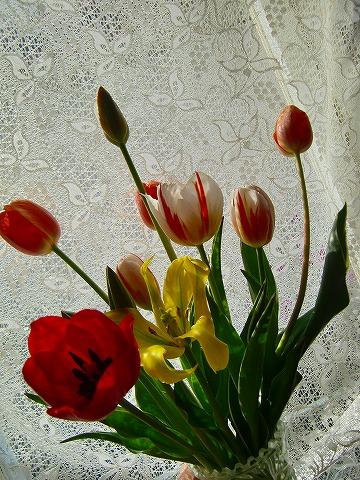 咲いてます♪ 14.4.16