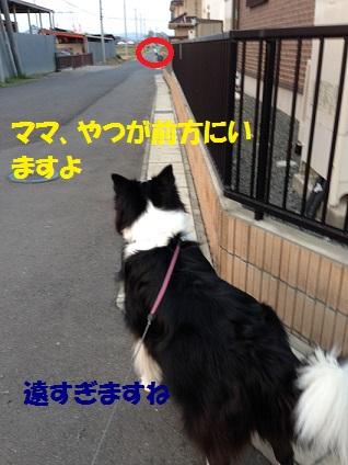 IMG_1709.jpg