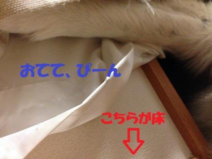 IMG_2173.jpg