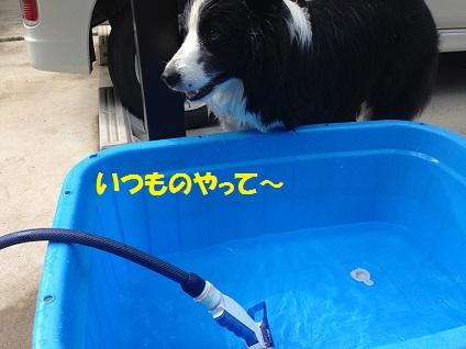 IMG_3260.jpg