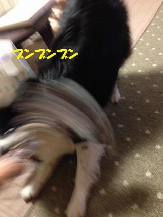 IMG_4617.jpg