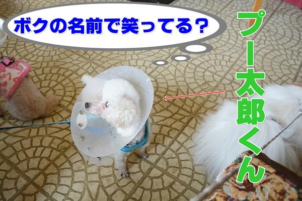 DSC_0069-20140401-223750.jpg