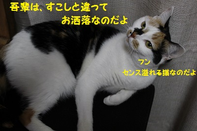 260810-2(4).jpg