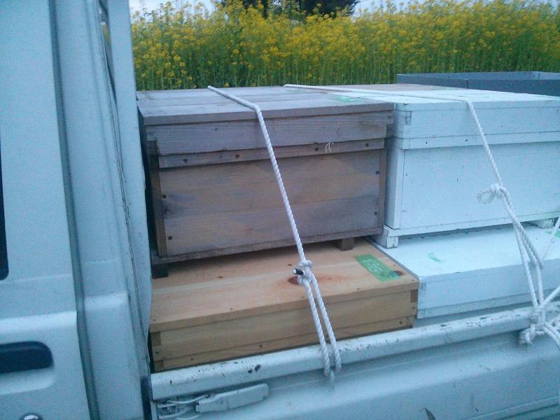 ミツバチの移動