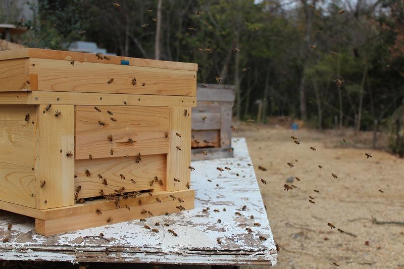 峰山に帰って来たミツバチ