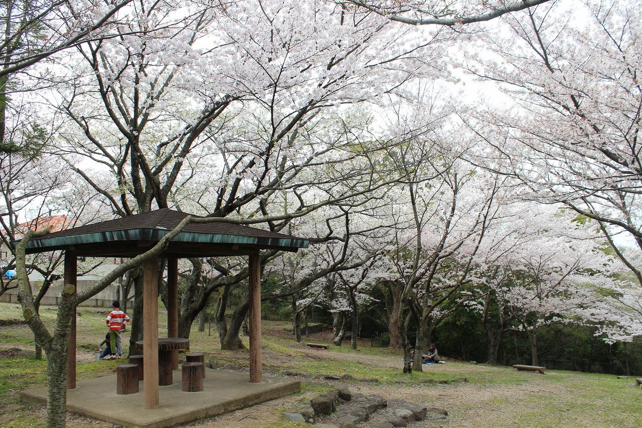 ひみつの桜