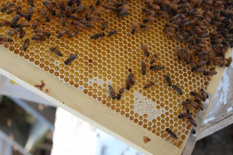 蜜蓋が出来始め