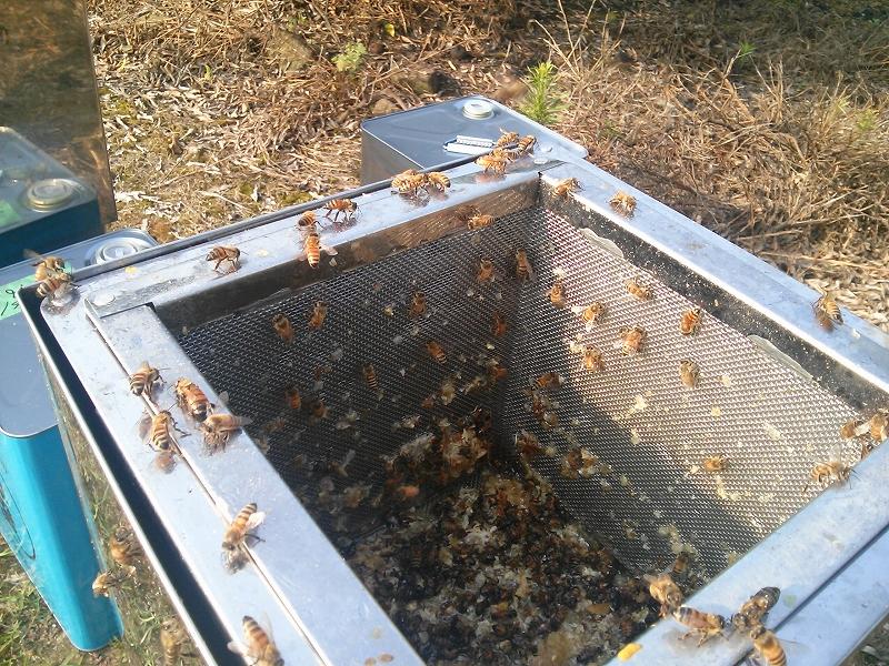 ろ過機に群がる蜂