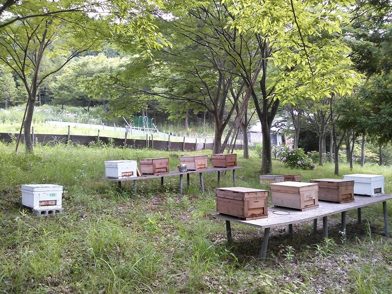 大滝養蜂場