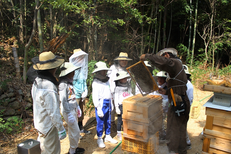 ミツバチ教室