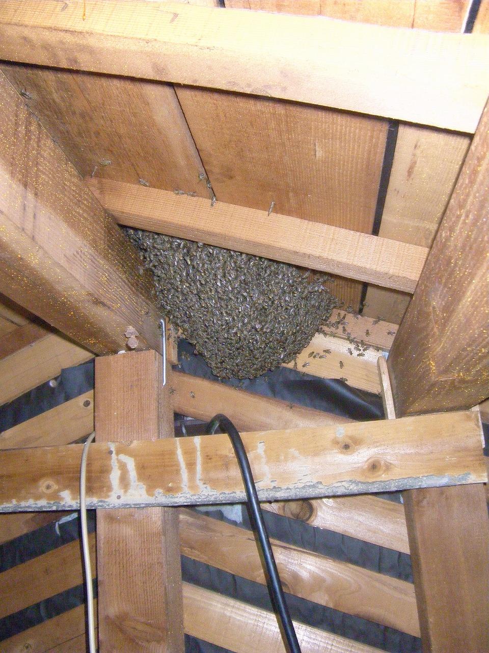 屋根裏ミツバチ