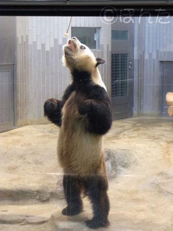 上野動物園2014_4
